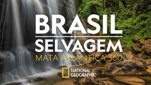 Brasil Selvagem: navegue pela Mata Atlântica em 360