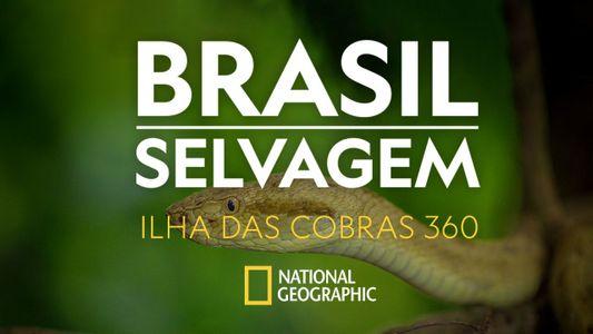 Brasil Selvagem: viaje pela Ilha das Cobras em 360