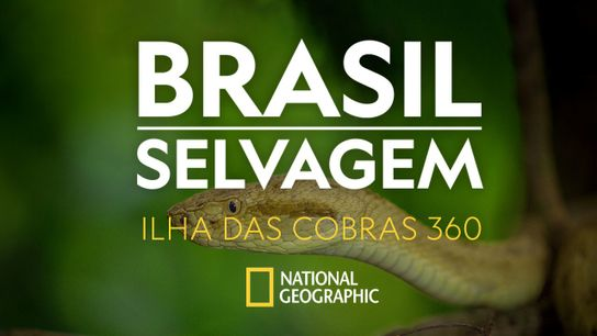 brasil-selvagem-ilha-das-cobras