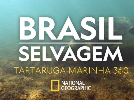 Brasil Selvagem: viaje pelo mundo das tartarugas marinhas em 360