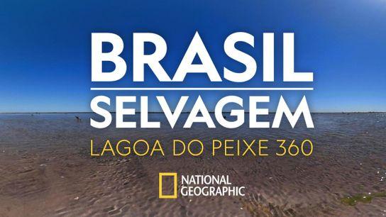 brasil-selvagem-lagoa-do-peixe