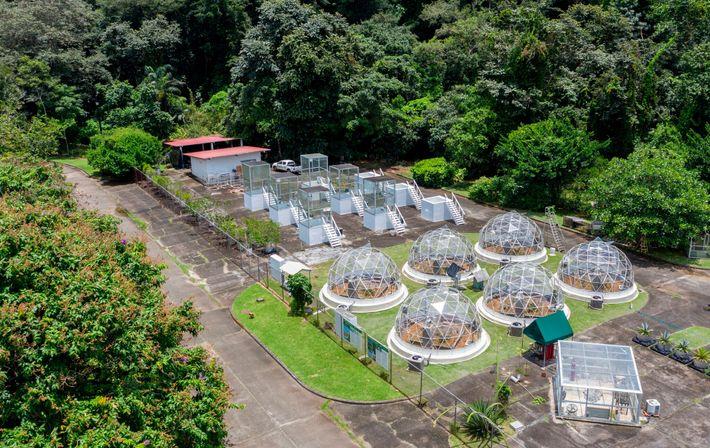 No Instituto Smithsoniano de Pesquisa Tropical em Gamboa, no Panamá, a vegetação é cultivada em estufas ...
