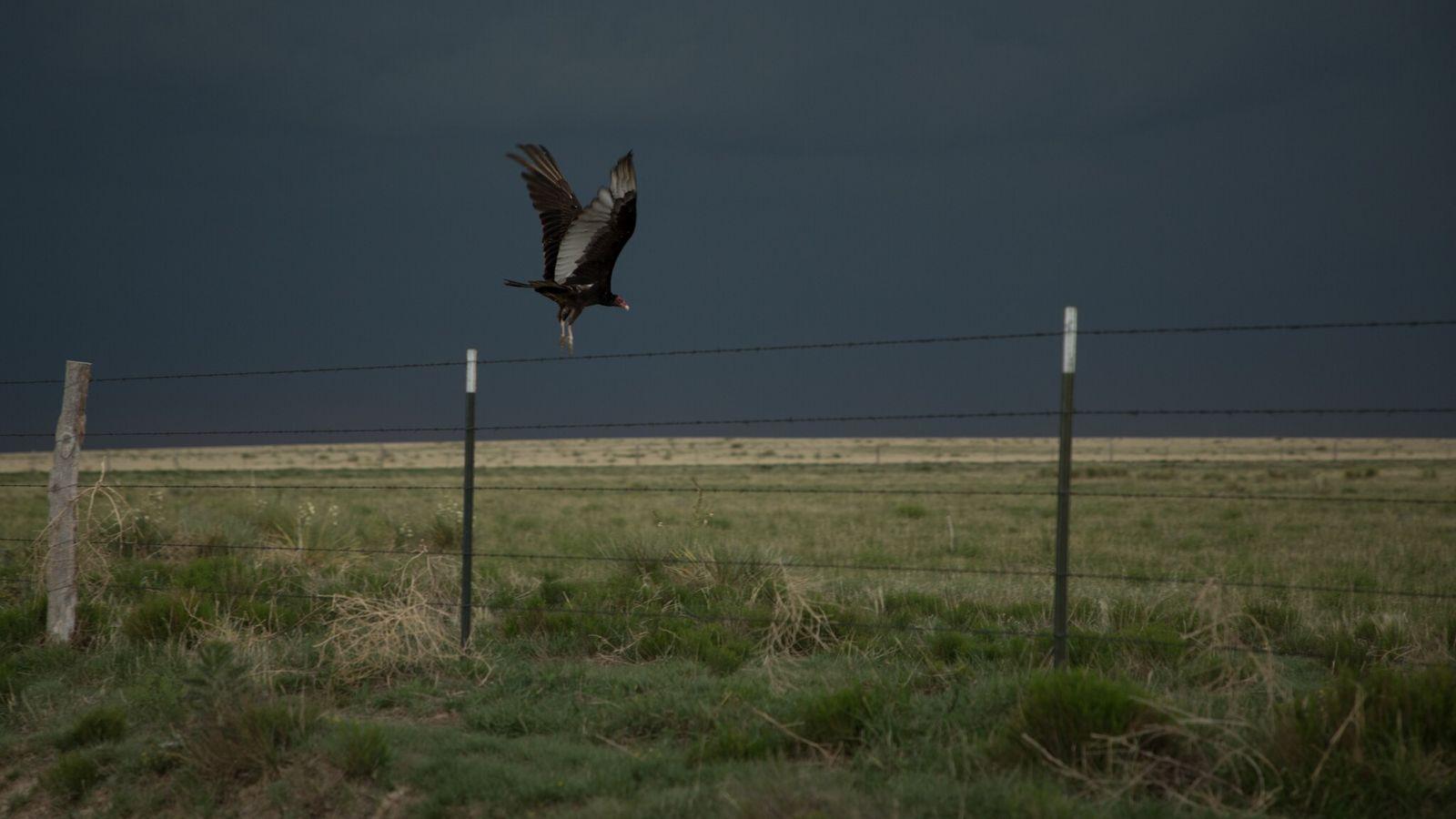 Urubus-de-cabeça-vermelha e seus parentes, os urubus-de-cabeça-preta, podem incomodar as pessoas. Mas cientistas afirmam que as aves ...