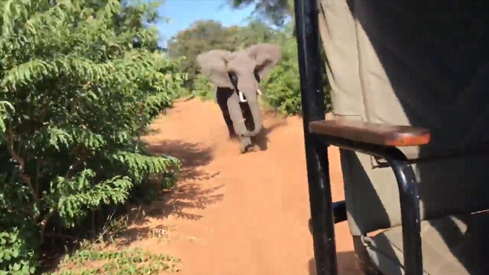 Elefante ataca veículo e tem a presa quebrada