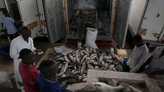 Fotos: Pescadores lutam para sobreviver no segundo maior lago do mundo