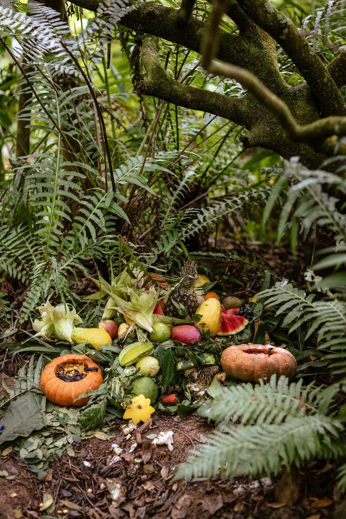 Oferenda de frutas e alimentos da terra feita a caboclos – como são chamados pela umbanda ...