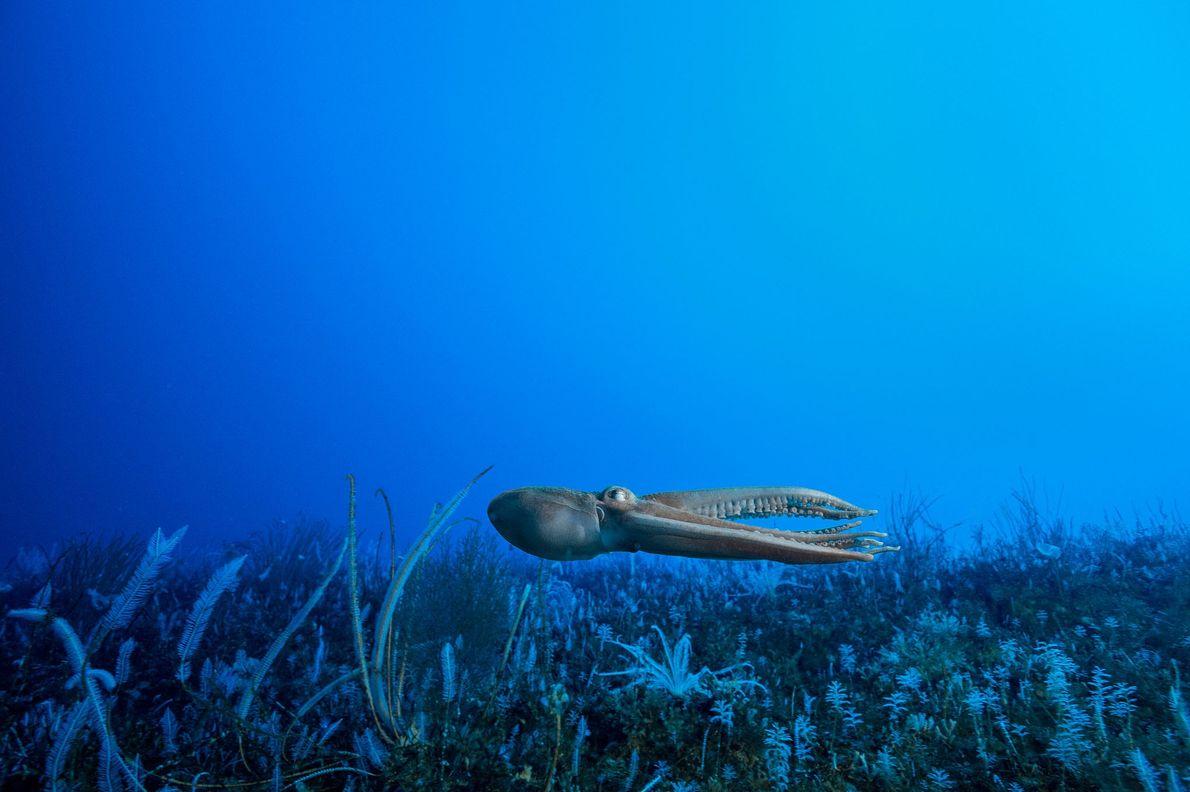 debaixo-da-antartida-bastidores-fotos-invertebrados-esponjas-debaixo-da-antartida-bastidores-fotos-polvo
