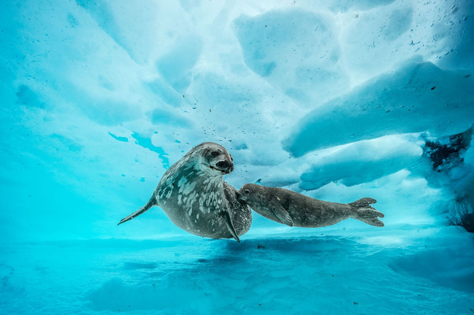 Mergulho sob a Antártida revela um mundo colorido e vibrante