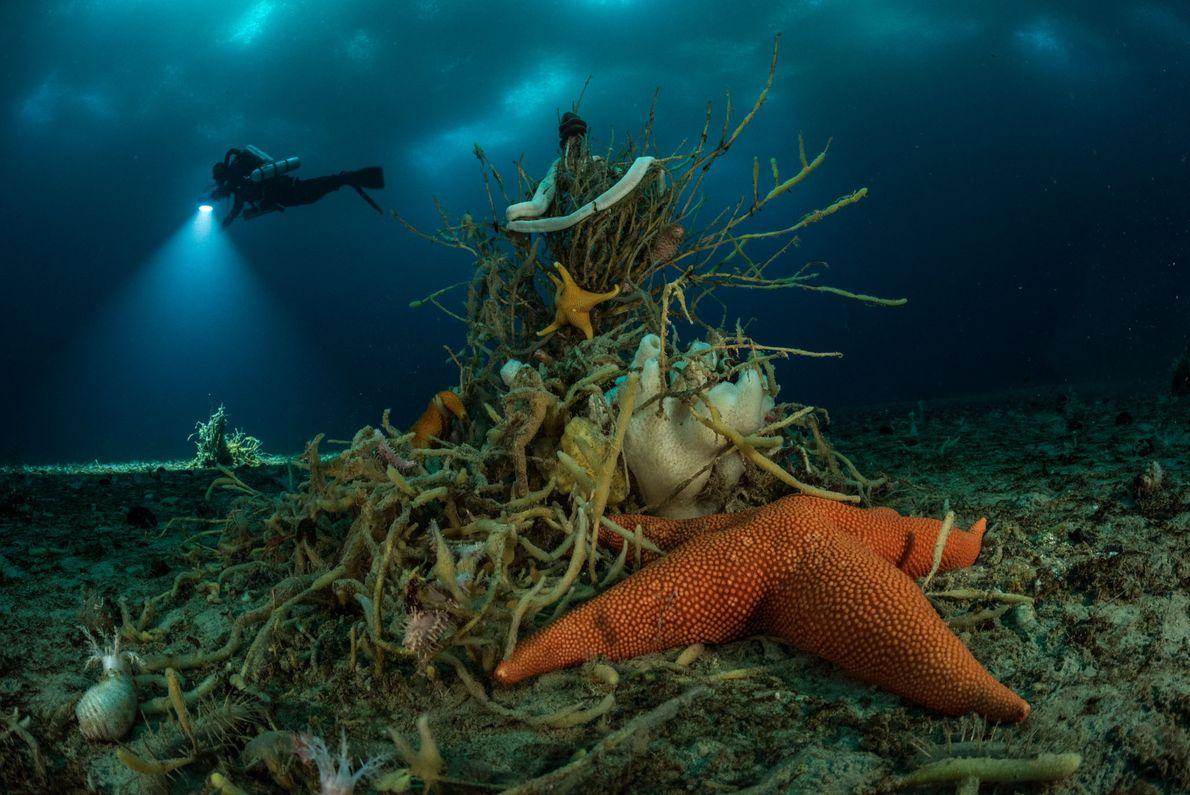 debaixo-da-antartida-estrela-do-mar