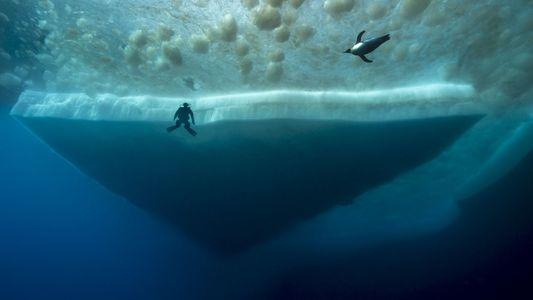Fotos: Criaturas misteriosas vivem sob o gelo da Antártida
