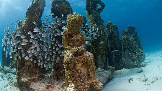 O Cancun Underwater Museum já recebe visitantes. Agora, os mergulhadores irão conhecer um novo museu deste ...
