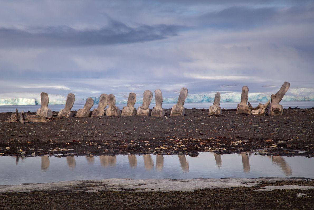 """Vestígios de um triste passado durante o período de matança indiscriminada das baleias na Antártida. """"Precisamos ..."""