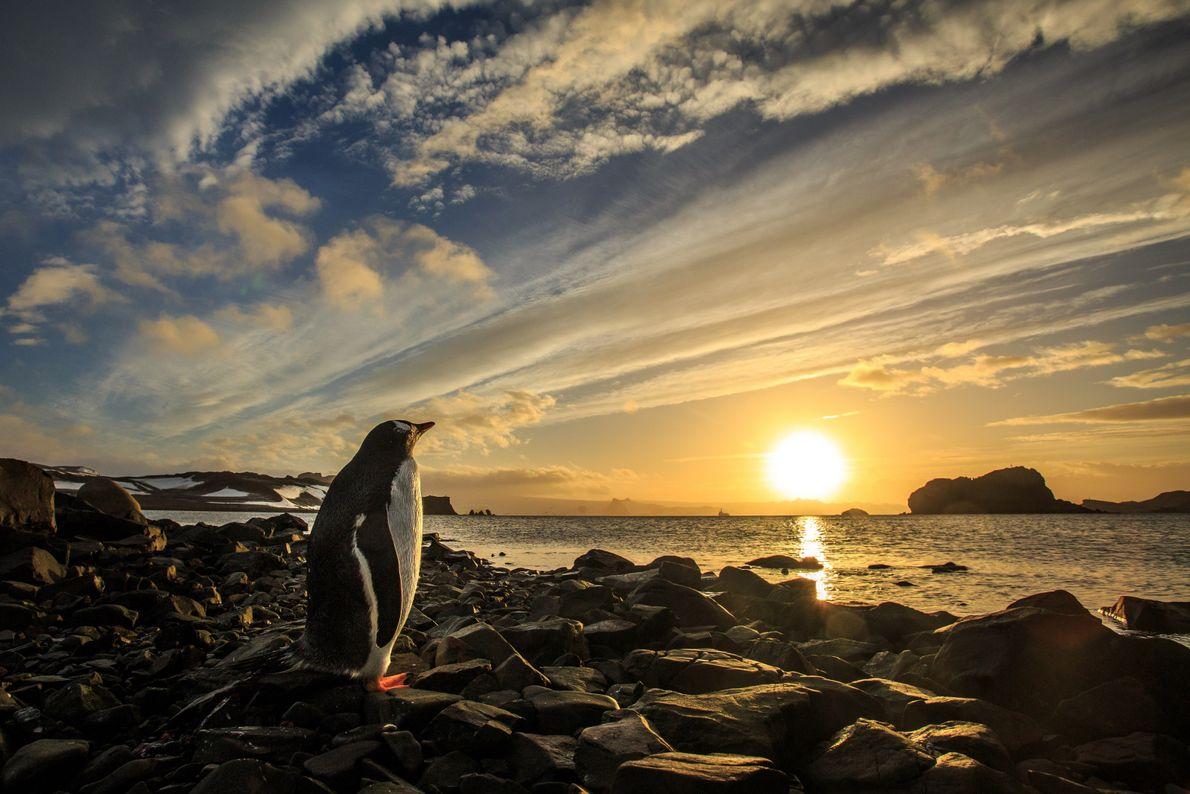 """""""Enquanto caminhava em direção à praia com objetivo de apreciar o nascer do sol, ao chegar, ..."""