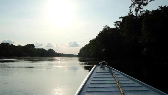 Criada em 1996, Mamirauá é a primeira reserva de desenvolvimento sustentável do Brasil.