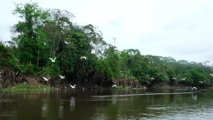 Reportagem acompanhou pesquisadores que trabalhavam para estimar a quantidade de botos-cor-de-rosa e tucuxis na Amazônia.