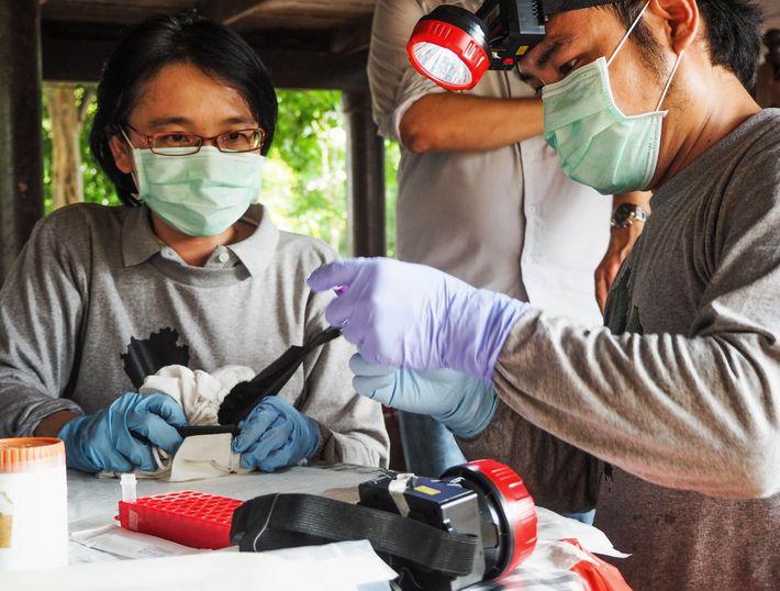 Supaporn Wacharapluesadee, especialista em vírus, e sua equipe se preparam para coletar amostras de sangue de ...