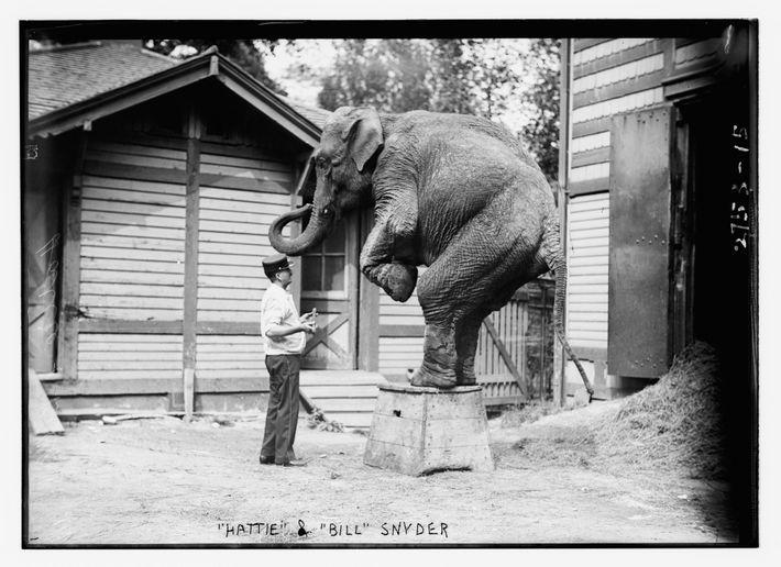 Em 1996, dias após sua última apresentação no circo, Hattie morreu de tuberculose. Após a morte ...