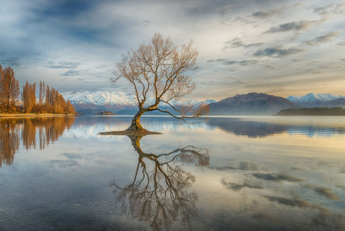 Wanaka Tree in Middle of Lake
