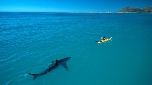Como uma incrível foto de tubarão se tornou viral