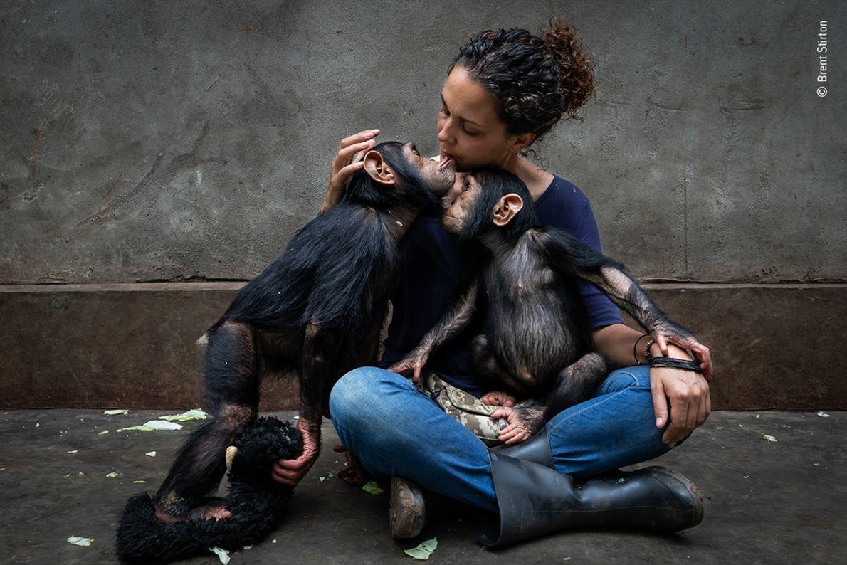 Foto de uma mulher sentada segurando dois chimpanzés no colo