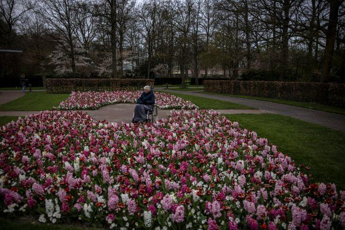 Mevouw Both, de 90 anos, aprecia as flores no jardim Keukenhof em Lisse, Holanda. O parque ...