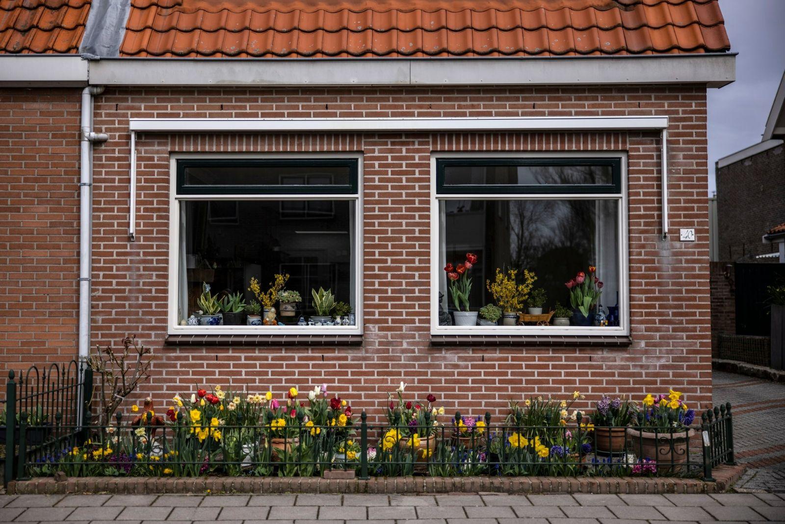 Tulipas e narcisos florescem no jardim de uma casa em Noordwijkerhout, na Holanda.