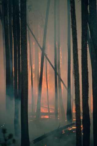 Floresta de pinheiros da espécie Pinus contorta atingida por um incêndio no Parque Nacional de Yellowstone.