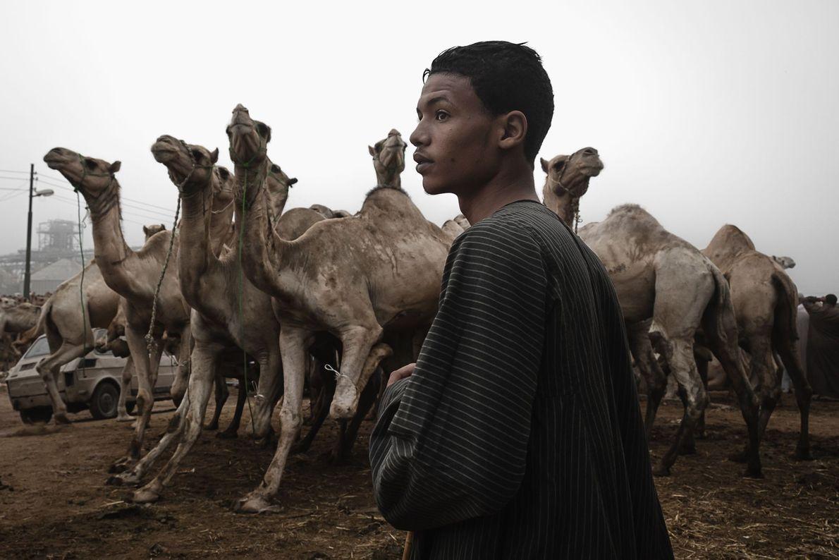 GIZÉ Shereen explica que este jovem homem viajou quase 650 quilômetros ao norte de Qina até Gizé ...