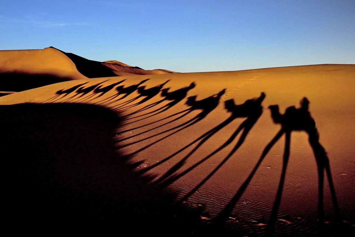 SHARM EL SHEIKH Um sol baixo forma sombras alongadas conforme camelos andam em fila pelo Deserto do ...