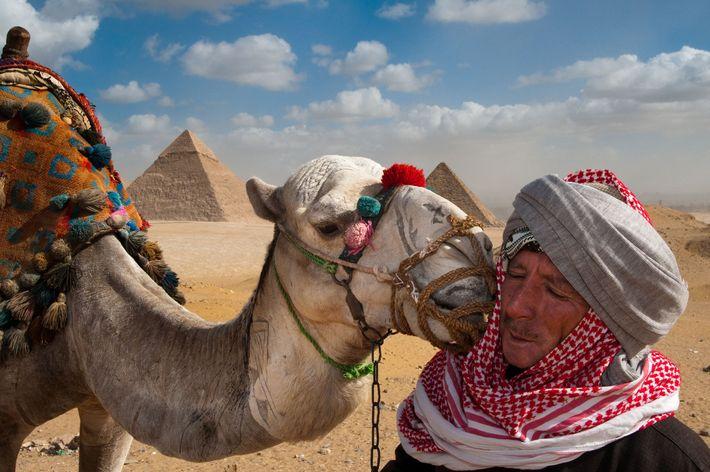 GIZÉ As Pirâmides de Gizé formam um plano de fundo para esse momento de ternura entre um ...